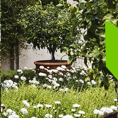 Erisa - Diseño de jardines - descubre sus ventajas