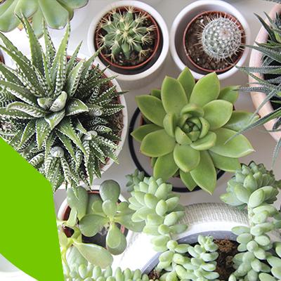 Erisa - Diseño de Jardines - Que tipos de plantas lucirán perfectas