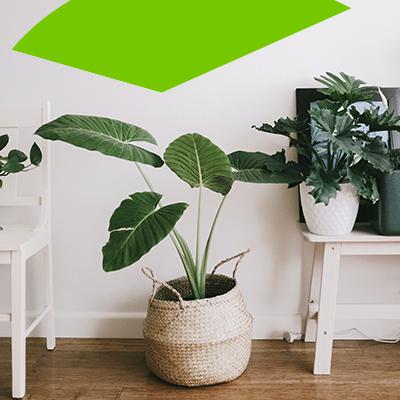 Erisa-23 ideas sencillas para remodelar el hogar con poco presupuesto-11-Plantas