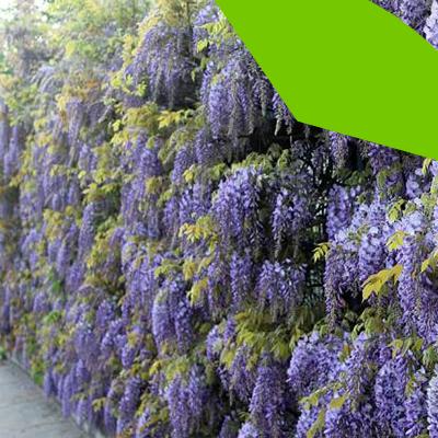 Erisa-29 ideas para jardines pequeños-15-Jardines con flores ubicados en un pasillo