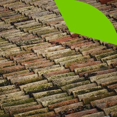 Erisa-Cuándo reemplazar el tejado-Crecimiento