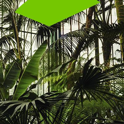 Erisa-10 maneras de transformar tu patio -Usa plantas tropicales y vegetación